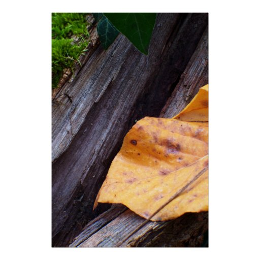 Leaf, Archival paper Posters