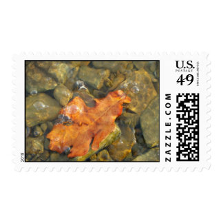 Leaf at the Lake Postage Stamp