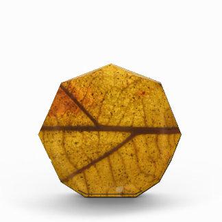Leaf Acrylic Award