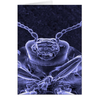 Leaf Beetle Image - Scanning Electron Microscope Card