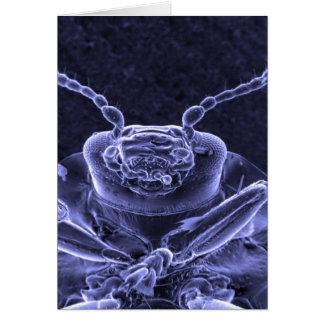 Leaf Beetle Image - Scanning Electron Microscope Greeting Card