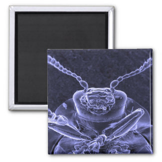 Leaf Beetle Image - Scanning Electron Microscope Magnet