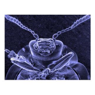 Leaf Beetle Image - Scanning Electron Microscope Postcard