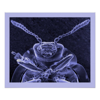 Leaf Beetle Image - Scanning Electron Microscope Poster