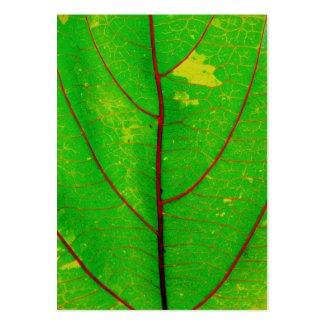 leaf profilecard