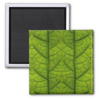 Leaf Closeup Vein Lines Photo Pattern Magnet