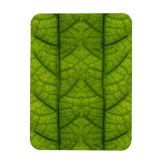 Leaf Closeup Vein Lines Photo Pattern Rectangle Magnet