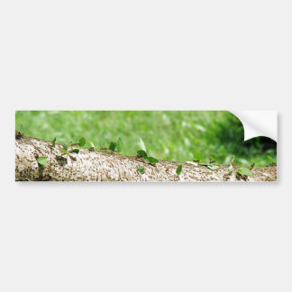 Leaf Cutter Ants in Costa Rica Bumper Sticker