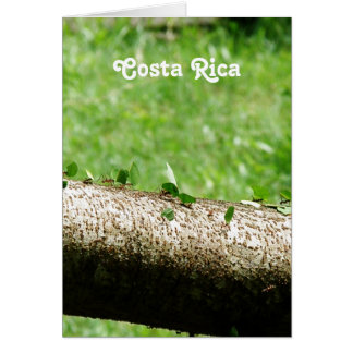 Leaf Cutter Ants in Costa Rica Card