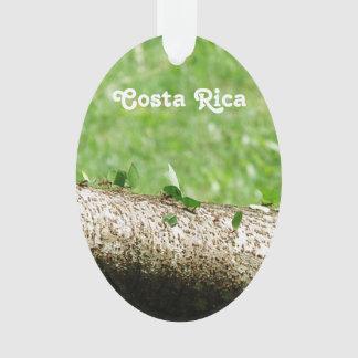 Leaf Cutter Ants in Costa Rica Ornament