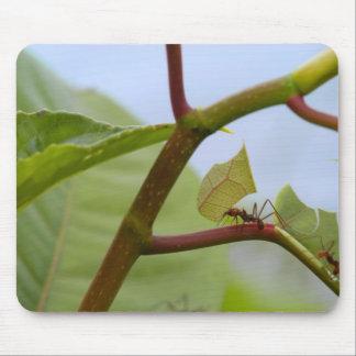 Leaf cutting ants mousepads