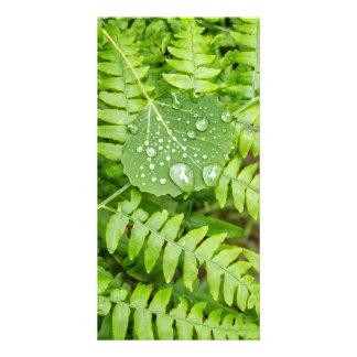 Leaf drops photo card