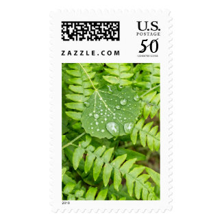Leaf drops postage