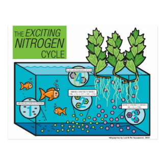 Leaf & Fin: Nitrogen Cycle Infographic Postcard