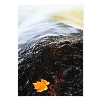 Leaf floating in river card