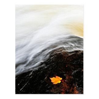 Leaf floating in river postcard