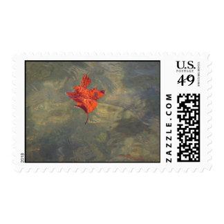 Leaf floating in water stamp