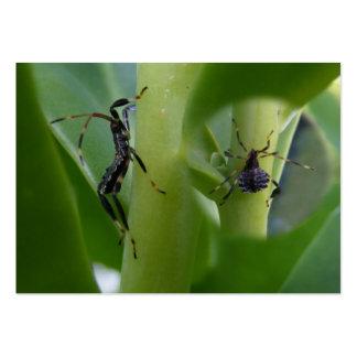 Leaf Footed Bug ~ ATC Business Cards
