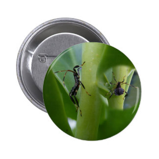 Leaf Footed Bug ~ button
