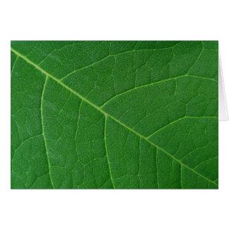 Leaf Green Close-up Photo Greeting Card