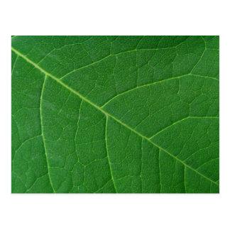 Leaf Green Close-up Photo Postcard