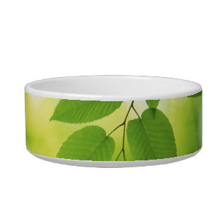Leaf green nature plant outdoors dog pet cat bowl