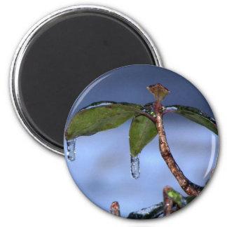 leaf ice drip magnet