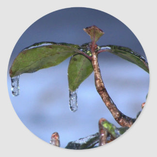 leaf ice drip classic round sticker