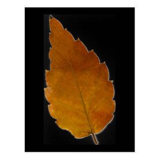 leaf III Postcard