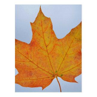 Leaf Image Postcard