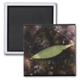 Leaf in a Puddle Fridge Magnet