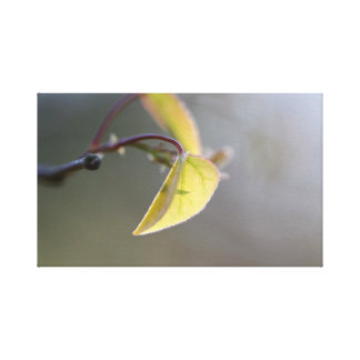 Leaf in the Fog Wrapped Canvas
