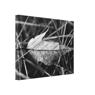 Leaf in the Grass Black and White Photo Canvas Print