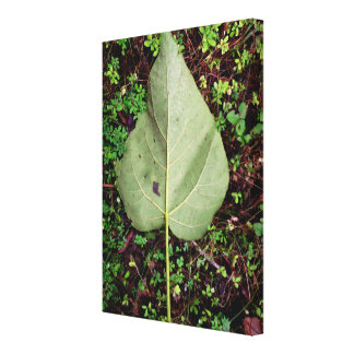 Leaf in the Woods on Canvas Gallery Wrap Canvas