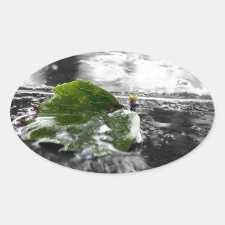 Leaf in Water Oval Sticker