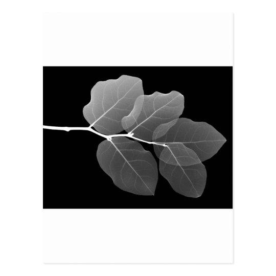 Leaf Invert Postcard