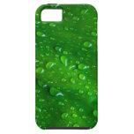 Leaf iPhone 5 Case