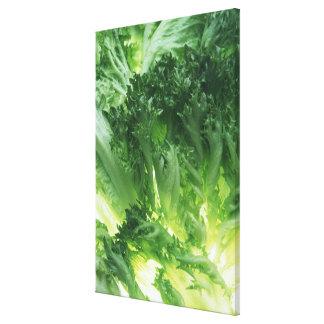 Leaf Lettuce Gallery Wrap Canvas