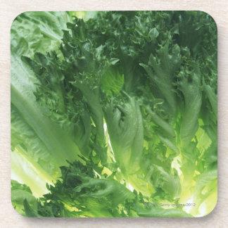 Leaf Lettuce Coaster