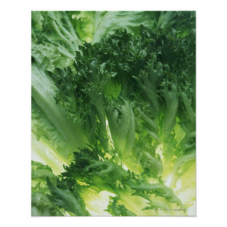 Leaf Lettuce Poster