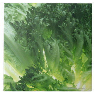 Leaf Lettuce Large Square Tile