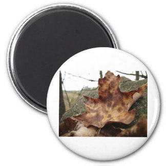 Leaf Life on a Stone Wall Magnet