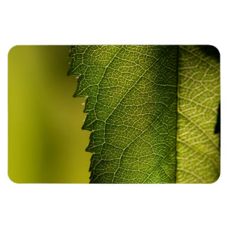 Leaf Macro Magnets