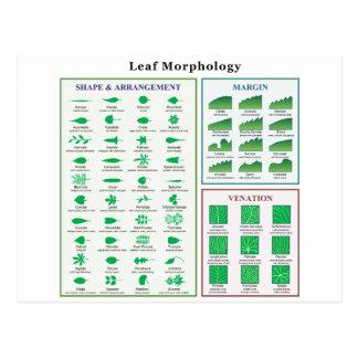 Leaf Morphology Chart Postcard