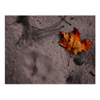 Leaf Next to Footprint Postcard