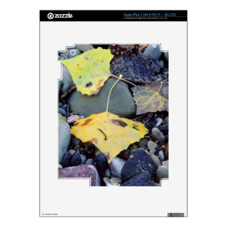 Leaf of Fremont cottonwood on flood plain 2 Skins For iPad 3