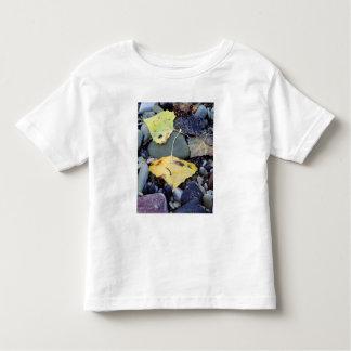 Leaf of Fremont cottonwood on flood plain 2 Toddler T-shirt