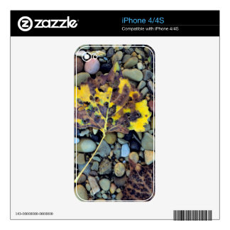 Leaf of Fremont cottonwood on flood plain 3 Skins For The iPhone 4