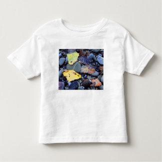 Leaf of Fremont cottonwood on flood plain Toddler T-shirt