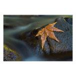 leaf of gold photo print